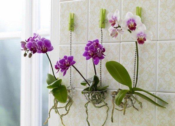 تزیین خانه با گل