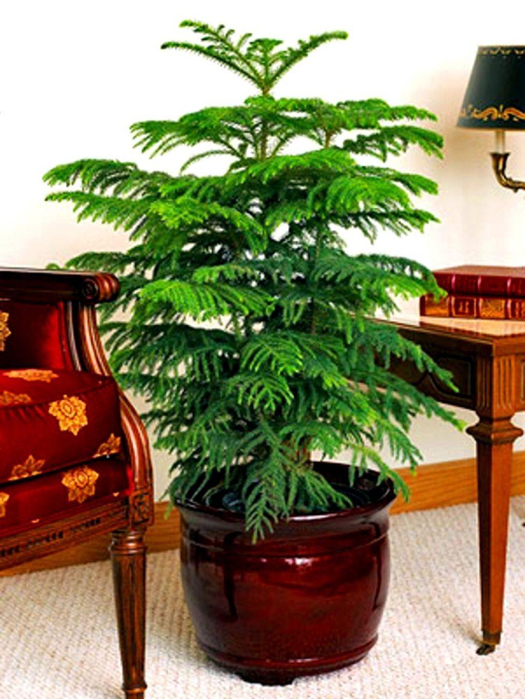 اسامی گیاهان آپارتمانی