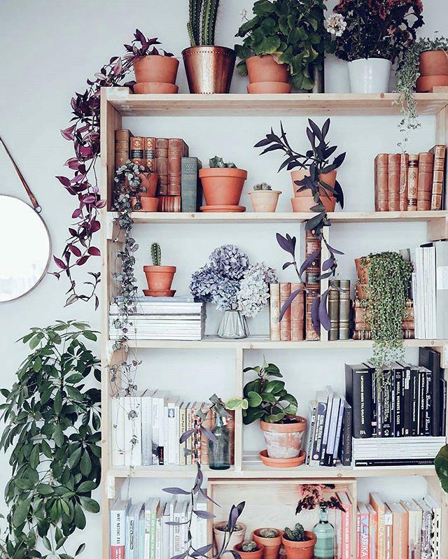 گلهای مناسب آپارتمان