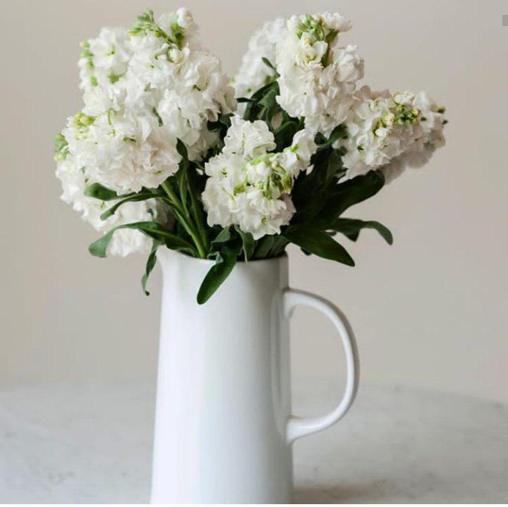گل های آپارتمانی زیبا