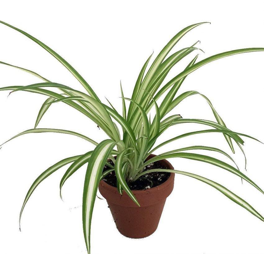 گیاه مناسب دفتر کار