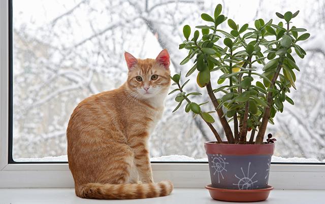 گیاهان مناسب برای گربه