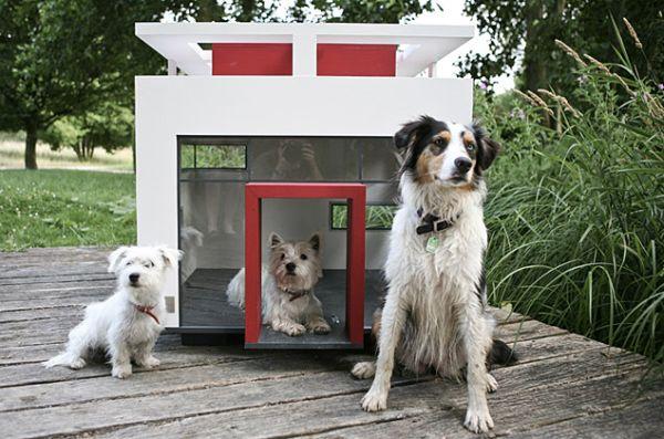 مبلمان مناسب برای حیوانات خانگی