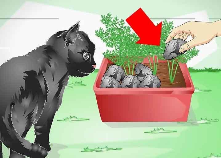 چه کنیم تا گربهیمان گیاهان خانگی را نخورد؟
