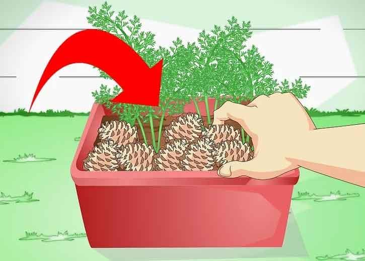 ریختن خاک گلدان توسط گربه ها