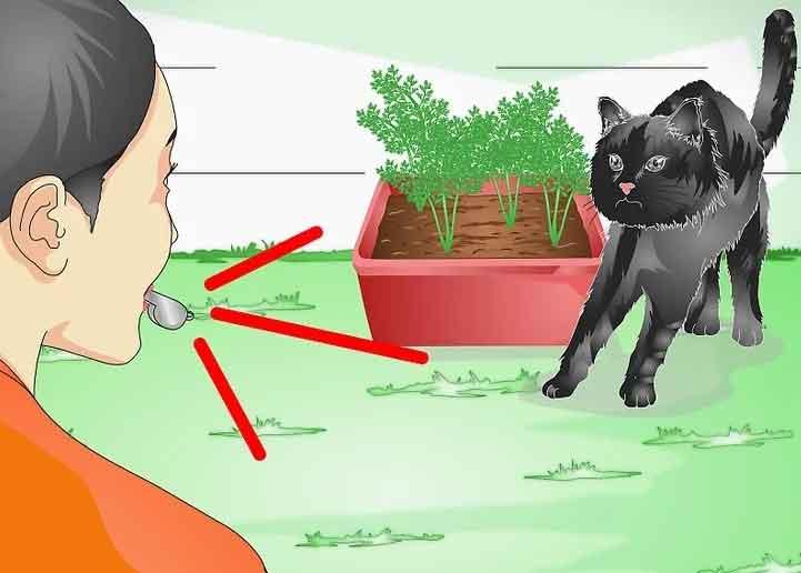 چگونه از گیاهان در برابر گربه ها محافظت کنیم